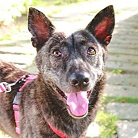 Adopt A Pet :: Jacob - San Ramon, CA