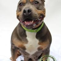 Adopt A Pet :: Ruby - Pomona, NY