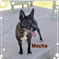 Adopt A Pet :: MOCHA - Ocala, FL