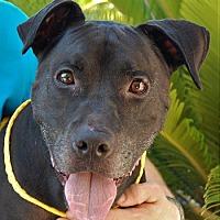 Adopt A Pet :: Omar - Las Vegas, NV