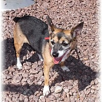 Adopt A Pet :: Star - Las Vegas, NV