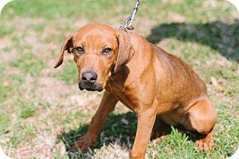 Hound (Unknown Type) Mix Dog for adoption in Marietta, Georgia - Bonnie