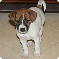 Adopt A Pet :: Bailey - Westfield, IN