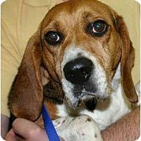 Adopt A Pet :: Taylor - Portland, OR