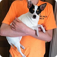 Adopt A Pet :: Mia - Columbia, SC