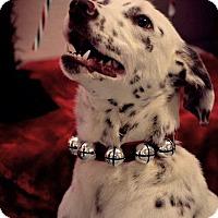 Adopt A Pet :: Almond - Fort Riley, KS