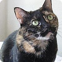 Adopt A Pet :: PAISLEY - Brea, CA