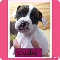 Adopt A Pet :: Cuda - Woodward, OK