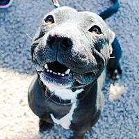 Adopt A Pet :: Mia - Odessa, TX