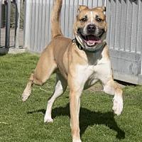 Adopt A Pet :: Gomez - Palm Springs, CA