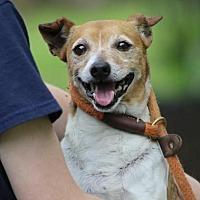 Adopt A Pet :: Tull/MS - Columbia, TN