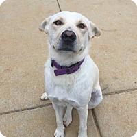 Adopt A Pet :: River - Holly Springs, NC