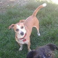 Adopt A Pet :: Benny - Oakley, CA