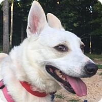 Adopt A Pet :: Evelyn - Alpharetta, GA