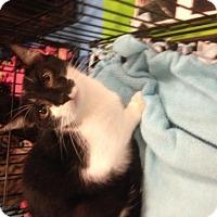 Adopt A Pet :: Jackson - Ephrata, PA