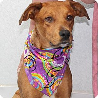 Adopt A Pet :: Katy*FOSTER NEEDED!* - Chicago, IL