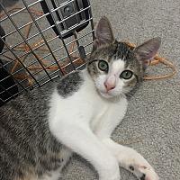 Adopt A Pet :: Karna - Los Angeles, CA