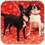 Photo 2 - Schipperke Mix Dog for adoption in Sugar Land, Texas - Bonnie