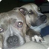 Adopt A Pet :: Linda and Grettir - Santa Monica, CA
