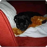 Adopt A Pet :: Roxanne - Avondale, PA