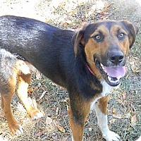 Adopt A Pet :: Tucker - cameron, MO