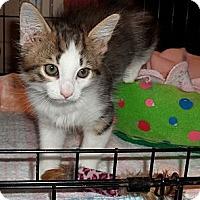 Adopt A Pet :: Tails - Acme, PA