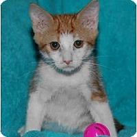 Adopt A Pet :: Thor - Catasauqua, PA