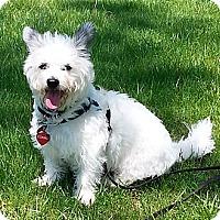 Adopt A Pet :: COSMO - GARRETT, IN
