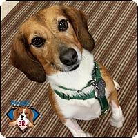 Adopt A Pet :: Oscar - Yardley, PA