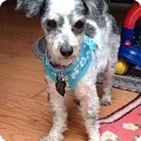 Adopt A Pet :: Betty Jo - Mt Gretna, PA