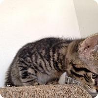 Adopt A Pet :: Luke - Dallas, TX