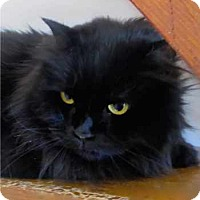 Adopt A Pet :: Mollie - Davis, CA