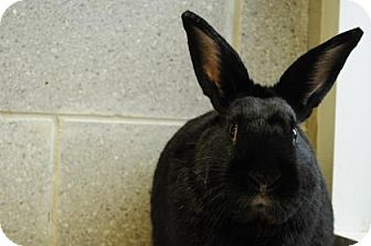 Other/Unknown Mix for adoption in Hamilton, Ontario - Checkers