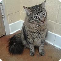 Adopt A Pet :: Whitney - Lake Charles, LA
