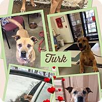Adopt A Pet :: TURK(EY) - Cadiz, OH