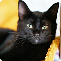 Adopt A Pet :: Sheeba - N. Billerica, MA