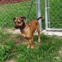 Adopt A Pet :: Polo - ocala, FL