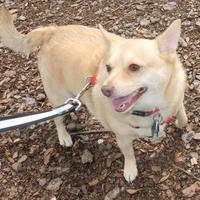Adopt A Pet :: Jonathan/Foxy - Umatilla, FL