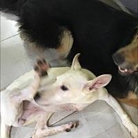 Adopt A Pet :: Tuta Tripod - NYC, NY