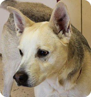 Shepherd (Unknown Type) Mix Dog for adoption in McDonough, Georgia - Decker