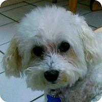Adopt A Pet :: Connie - La Costa, CA
