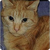 Adopt A Pet :: Guy - Warminster, PA