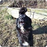 Adopt A Pet :: Flint ADOPTION PENDING! - Antioch, IL