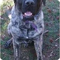 Adopt A Pet :: Hank Henry - Asheboro, NC