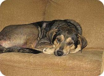 Shepherd (Unknown Type) Mix Dog for adoption in Minneapolis, Minnesota - Winnie