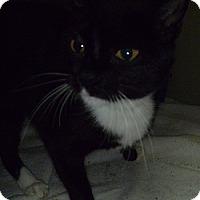 Adopt A Pet :: Fira - Hamburg, NY