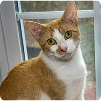 Adopt A Pet :: Noralee - Milford, MA
