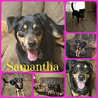 Adopt A Pet :: Samantha - Ft Worth, TX