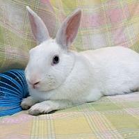 Adopt A Pet :: Bean - Paramount, CA