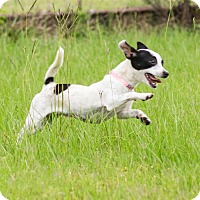 Adopt A Pet :: A - JINNY - Stamford, CT